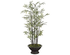 Bamboo Tree 6.5ft
