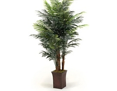 Areca Palm Tree 8ft