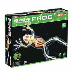 4D Master 4D Vision Full Skeleton Frog Model