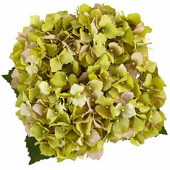 Hydrangea In New Baby Ceramic Floral Arrangement