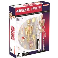 4D-Human Skeleton Anatomy Model