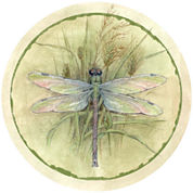Thirstystone® Dragonfly Set of 4 Coasters