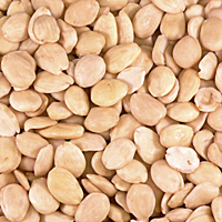 Marcona Almonds by Peregrino - Blanched (2.2 Pounds)