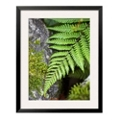 "27""W x 33""H Ferns By Wall Print, 85723"