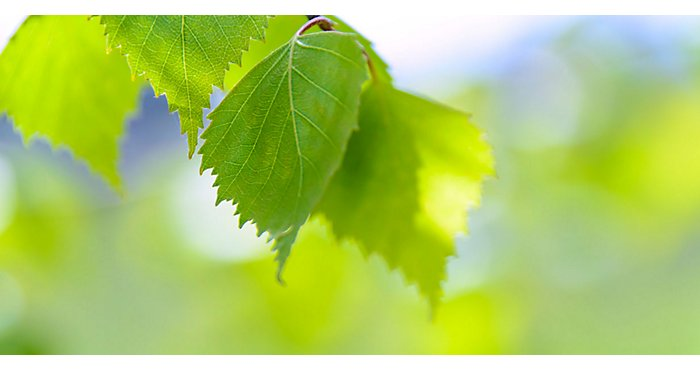 Green Furniture: NBF's Commitment to the Environment | NBF Blog
