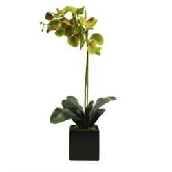 "Single Green Orchid - 25""H, 82342"