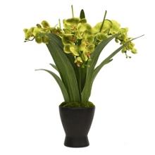 """Large Green Orchid Arrangement - 26""""H, 82343"""
