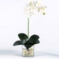 "Faux Phalaenopsis in Glass Container - 24""H, 82346"