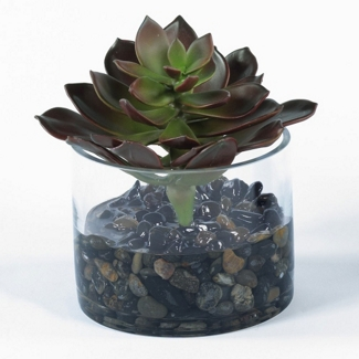 """Burgundy Succulent in Glass Container - 7""""H, 82347"""