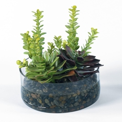 """Succulent Garden in Glass Container - 9""""H, 82348"""