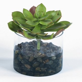 """Single Succulent in Glass Container - 7""""H, 82353"""
