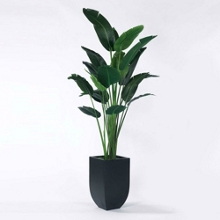 Palm Tree in Metal Container - 8'H, 82356