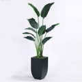 Palm Tree in Metal Container - 6'H, 82357