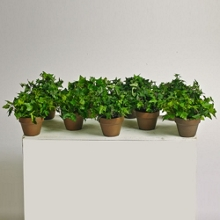 Potted Ivy - 6 Inches Tall - Set of 9 , 87381