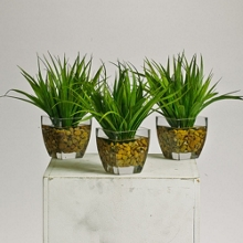 Grass Plants in Glass Pots with Faux Water , 87383