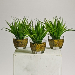 Grass Plants in Glass Pots with Faux Water , 87383-1