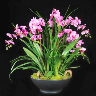 """Phalaenopsis Orchid With Greenery - 40""""H, 87696"""