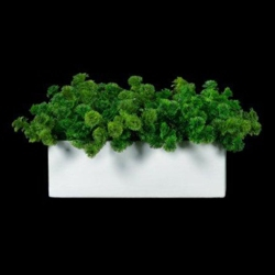"Greenery in Rectangle Container - 8""H, 87698"