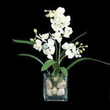 """Small Orchid In Cube - 17""""H, 87700"""