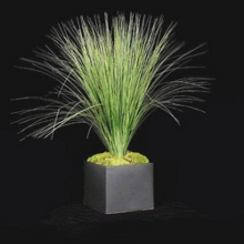 """Tall Grass in Black Cube - 29""""H, 87705"""
