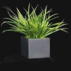 "Yucca Grass in Black Cube - 15""H, 87706"