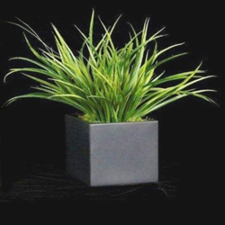 """Yucca Grass in Black Cube - 15""""H, 87706"""