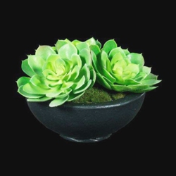 "Succulent Centerpiece - 10""H, 87709"