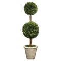 "Preserved Boxwood Double Sphere Topiary - 36""H, 90107"