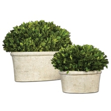 Preserved Boxwood Domes - Set of Two, 90108