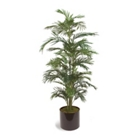 Areca Palm Tree - 6', 85640