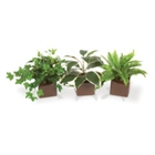 Set of Three Assorted Foliage, 85649