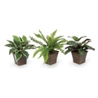 Assorted Foliage Set of 3, 91676
