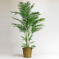6 Foot Tall Areca Palm Tree with Woven Pot, 87367