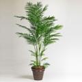 Faux Areca Palm Tree - 7 Ft., 87366