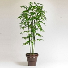 Potted Bamboo Tree - 6 Ft., 87372