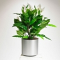 Realistic White Peace Lily Plant - 3 Ft.