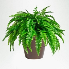 Natural Looking Potted Fern - 2 Ft., 87378