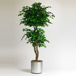 Realistic Indoor Ficus Tree - 7 Ft., 87362