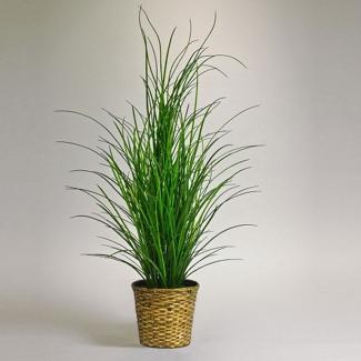 5 Foot Tall Grass in Woven Basket , 87379