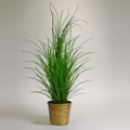 5 Foot Tall Grass in Woven Basket