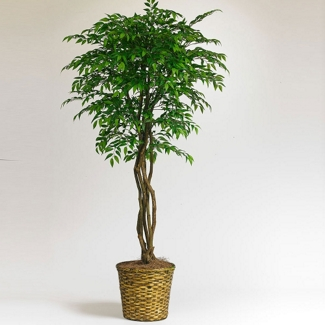 7 Foot Smilax Tree with Woven Pot, 87357