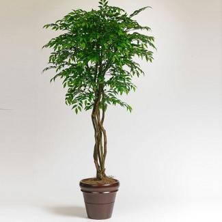 6 Foot Indoor Office Tree - Smilax, 87360