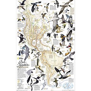 View Bird Migration in the Americas Thematic Map, Laminated image