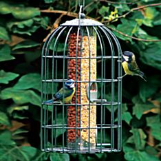 Bird Feeders Garden