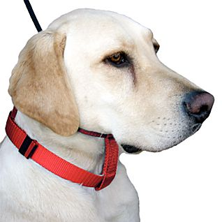 Cesar Millan's Illusion Collar and Leash Dog Training Set