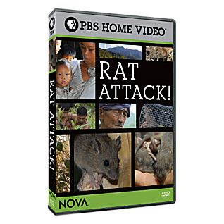NOVA: Rat Attack! DVD