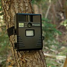 Wildlife Motion-Detection Camera