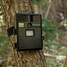 Motion Infrared Camera for Wildlife