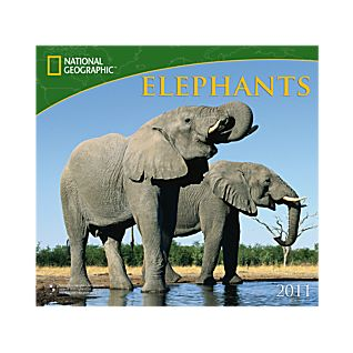 2011 National Geographic Elephants Wall Calendar