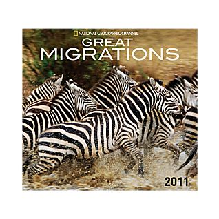 2011 National Geographic Great Migrations Wall Calendar